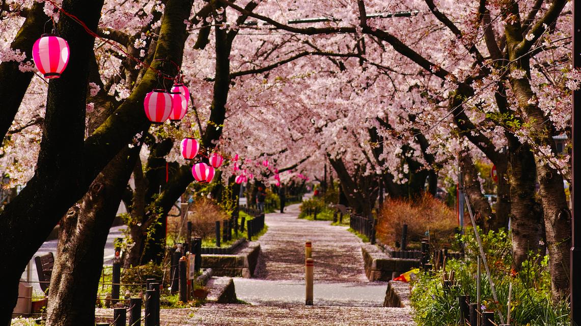 Любите Японию?