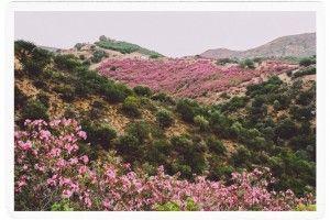 Спонтанное-путешествие-уютная-и-гостеприимная-Греция-33