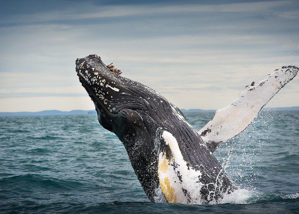 Где посмотреть китов в ноябре