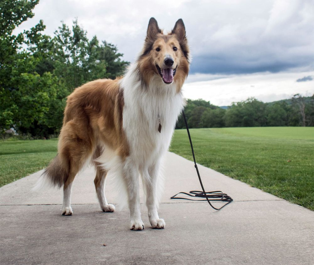 Догситтеры. Гуляй с собаками и зарабатывай во время путешествий
