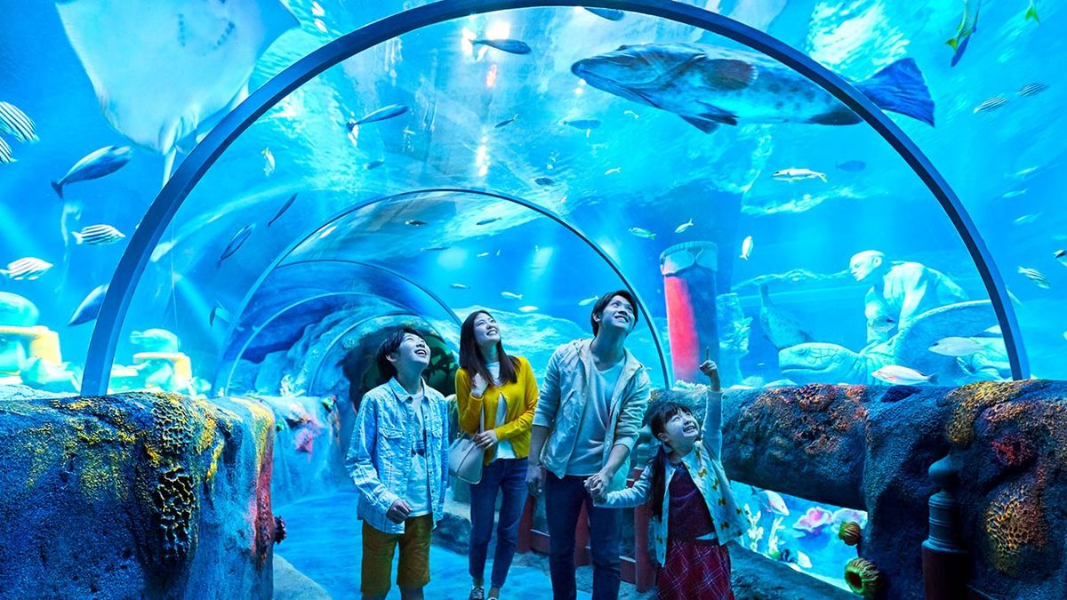 Красота морских глубин: 5 лучших океанариумов и аквариумов