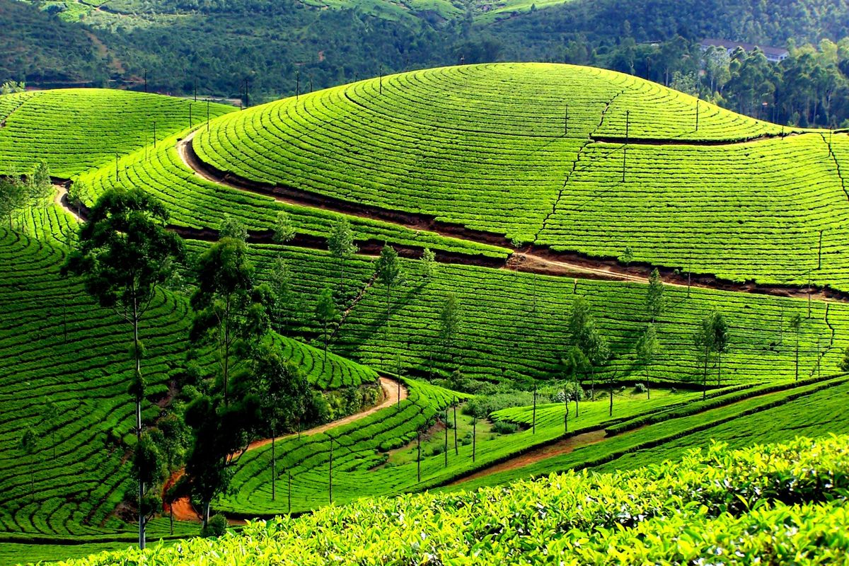 Визитные карточки Шри-Ланки: топ-10 самых интересных мест