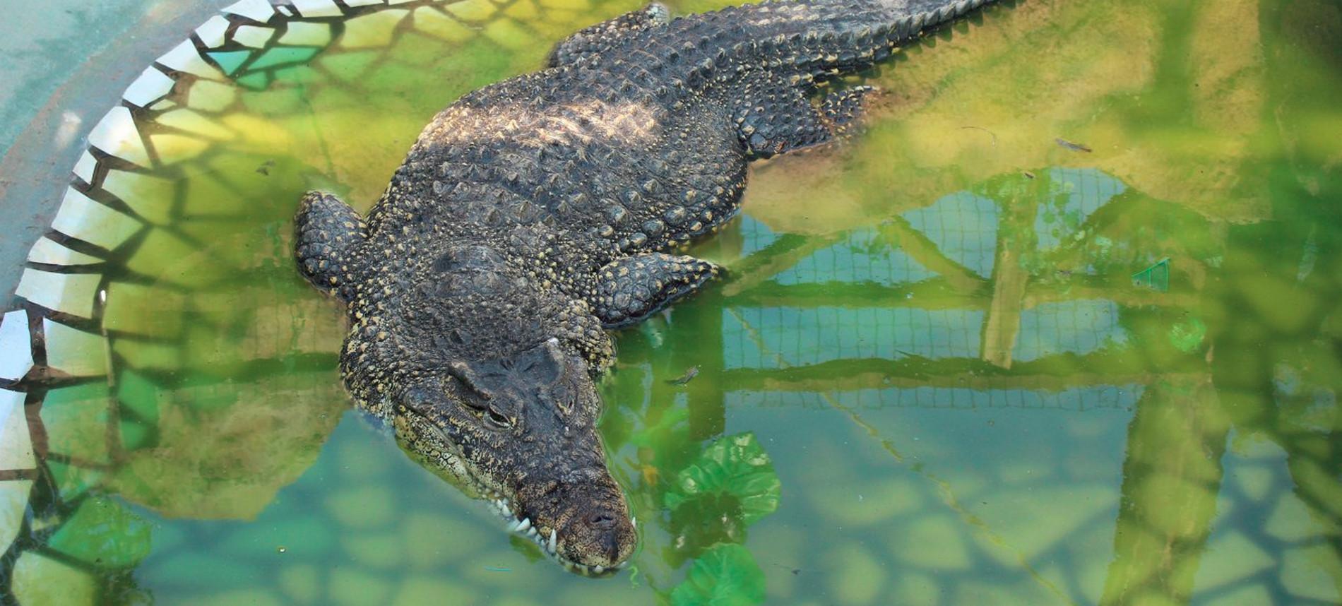 Неожиданная экзотика: крокодилья ферма в станице Голубицкой