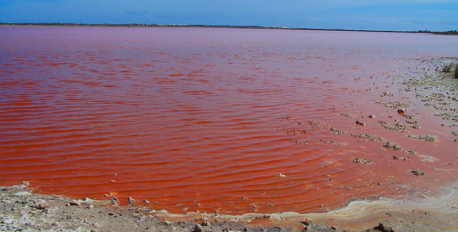 Чем притягивает туристов «Красное море» у побережья Австралии?