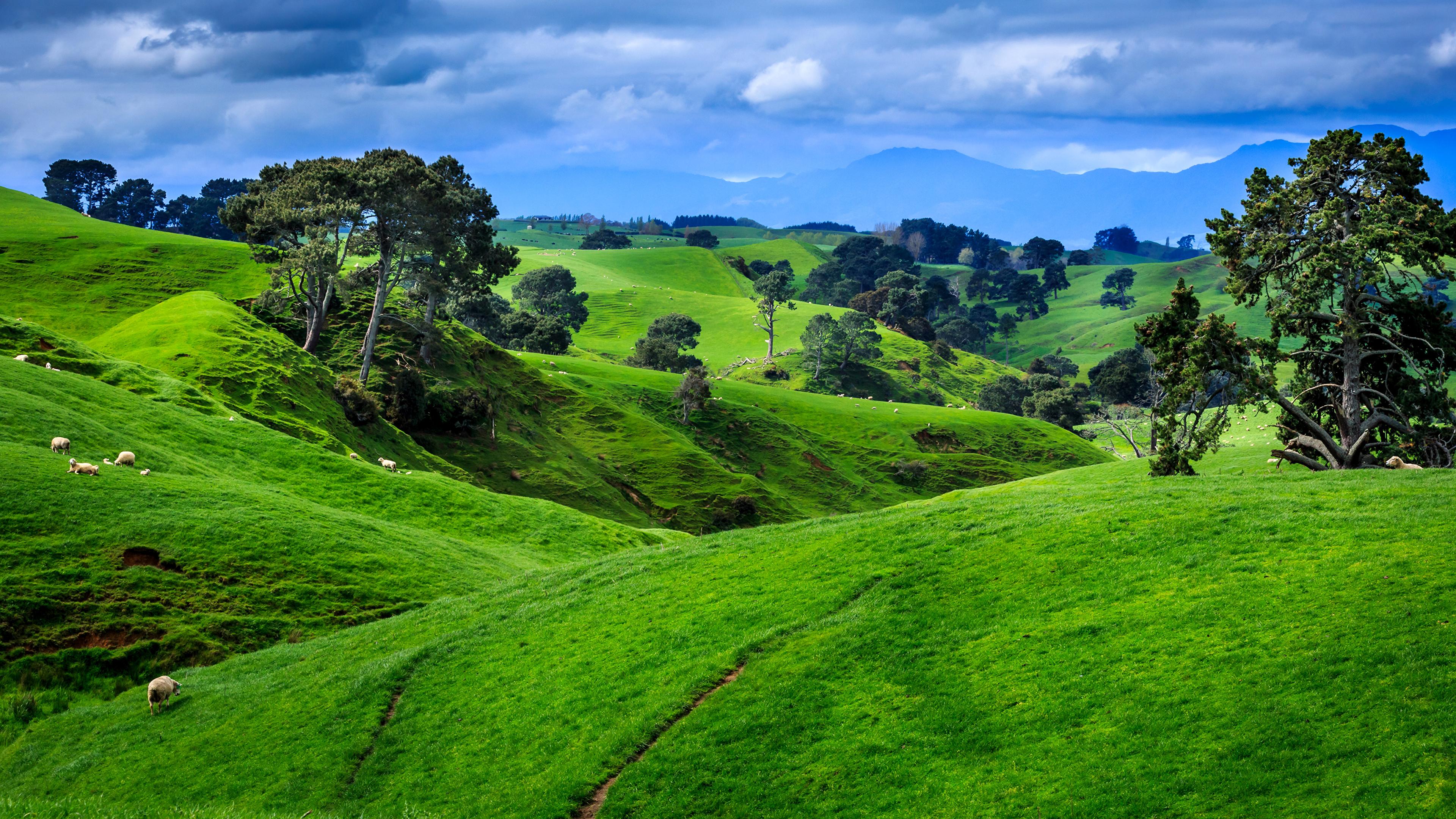 «Старая» Зеландия – существует ли на самом деле и где находится?