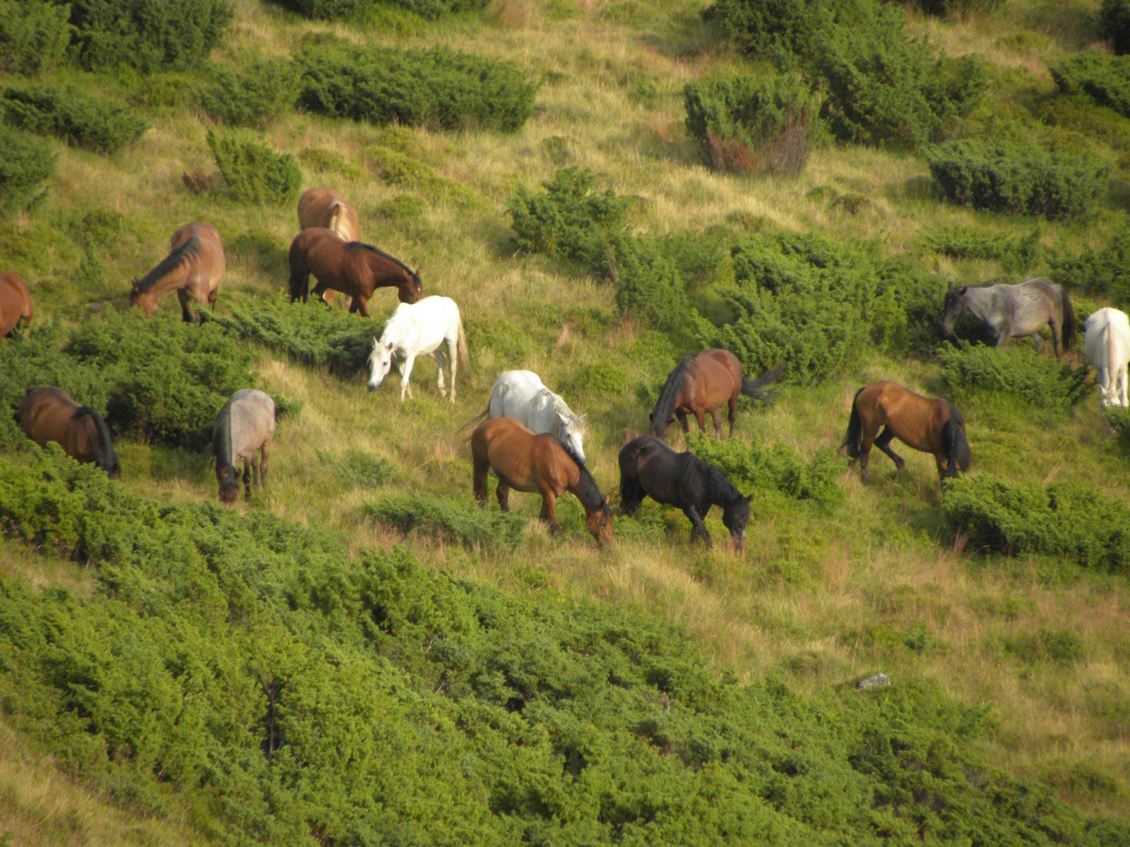 Вся правда и мифы о диких лошадях и быстром интернете в Румынии